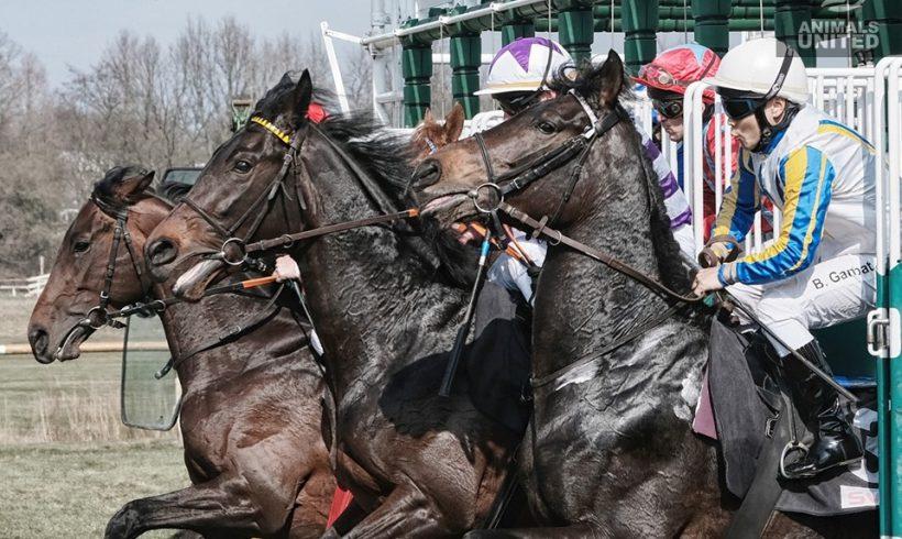 Das grausame Business um Pferde