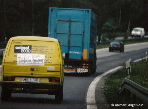 1996_Begleitfahrt-TTT-animal2000-c-Animals-Angels