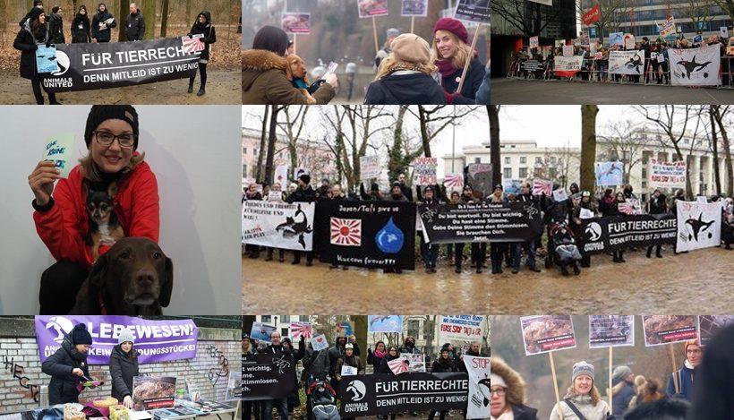 WHAT A WEEK: Von Protest gegen Delfinmassaker bis Promi-Spendenaktion