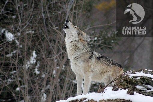 Wildpark Johannismühle Wolfsnacht, die Skandale hören nicht auf