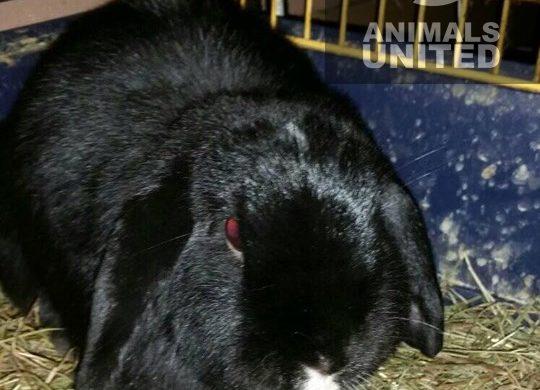 Tierrettung für 5 Kaninchen und einen Wellensittich