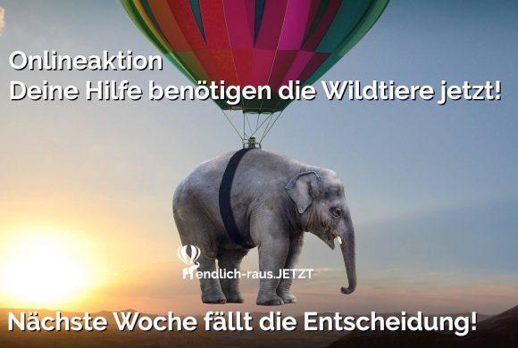 Bundesweites Wildtierverbot in Zirkussen – Eure Stimme wird gebraucht