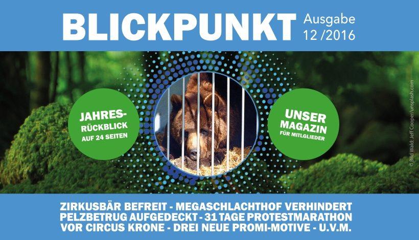 """Unser Vereinsmagazin """"Blickpunkt"""" 2016 ist raus!"""