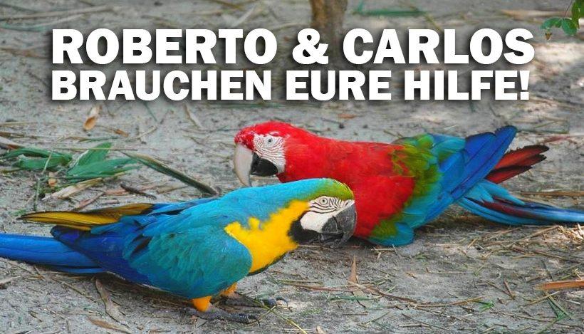 """""""Tal der Tiere"""": Patenschaft für die Aras Roberto & Carlos"""