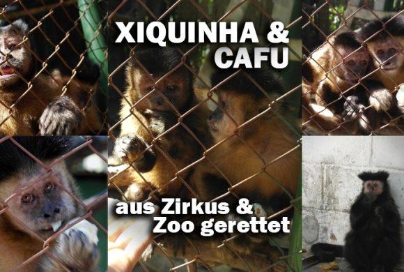 """""""Tal der Tiere"""": Patenschaft für die Kapuzineraffen Cafu & Xiquinha"""