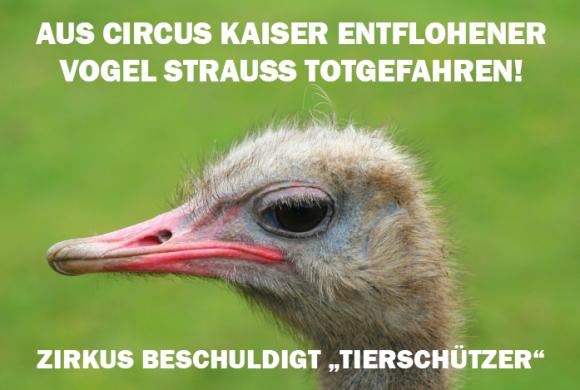 """Des Circus Kaisers alte Leier: Tiere fliehen, """"Tierschützer"""" sind schuld"""