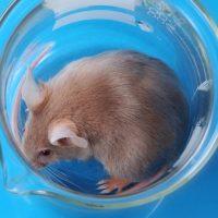 Geht es Labormäusen gut? – Wo Wissenschaft versagt!