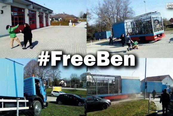 #FreeBen – Die spektakuläre Befreiung des letzten Zirkusbären Deutschlands!