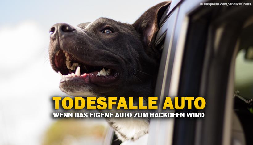 Wenn das Auto zum Backofen für Hunde wird
