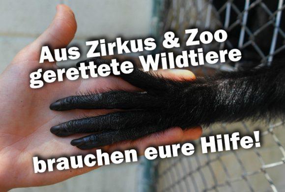 DRINGEND: Aus Zirkus & Zoo gerettete Wildtiere brauchen euch!