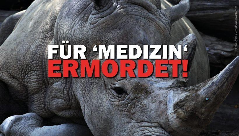 Nashörner – Für 'Medizin' ermordet & vom Aussterben bedroht!