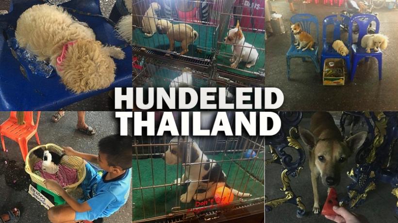 Thailand-Urlaub: Hunde auf Eiswürfeln