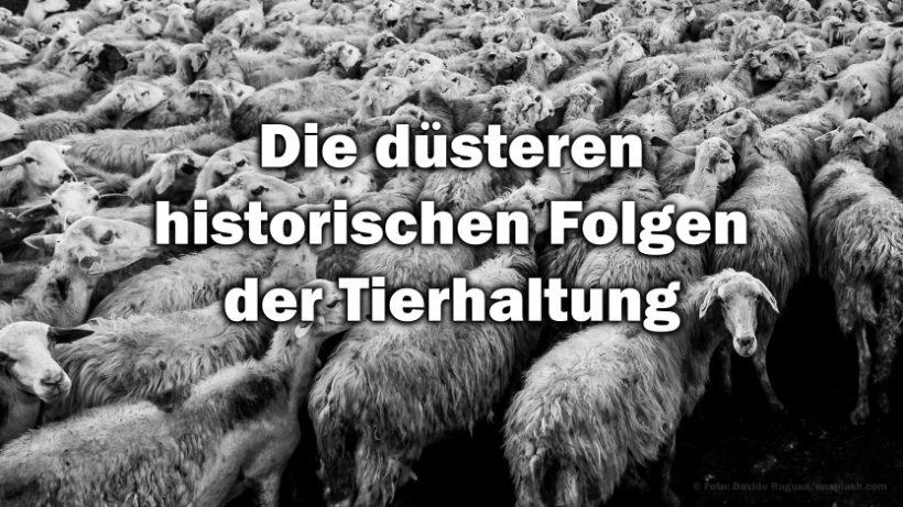 Kriege, Sklaverei und Diskriminierung als direkte Folge der Tierhaltung