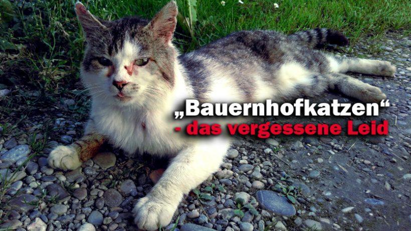 """Das traurige Schicksal der """"Bauernhofkatzen"""""""