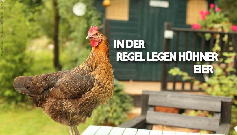 Hühner(eier) – In der Regel legen Hühner Eier