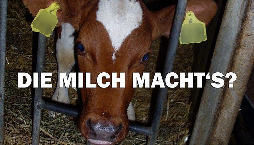 Die Milch macht's? Von verwaisten Kälbchen & Werbelügen