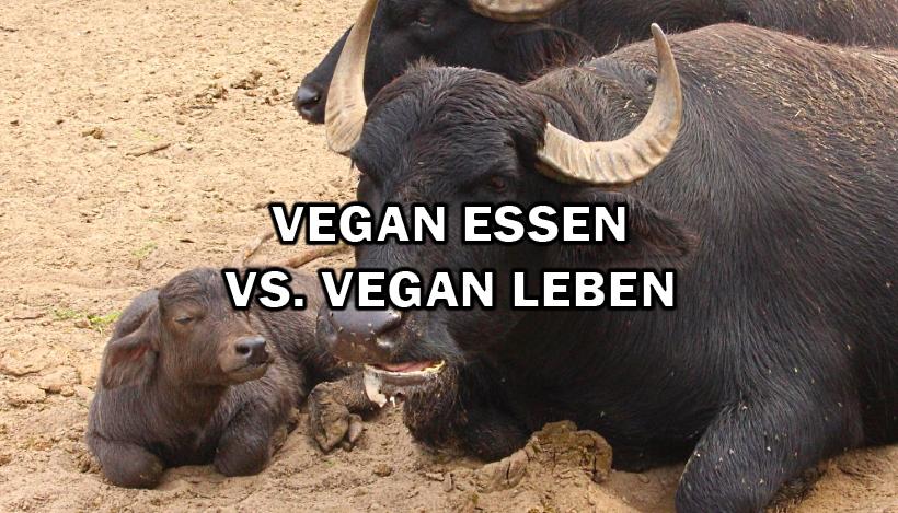 Warum vegan ESSEN nicht genug ist und ich vegan LEBE!