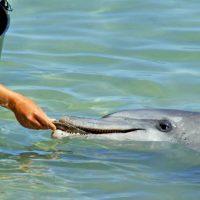 Tierschutz im Urlaub: Delfinarien