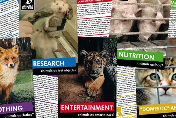 Jetzt auch mit englischen Flyern über Tierrechte aufklären!