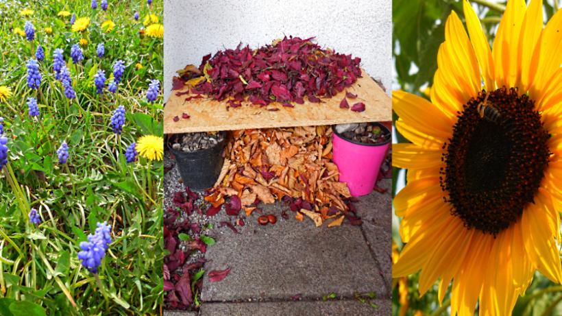 Tierfreundliche Tipps für Garten & Balkon