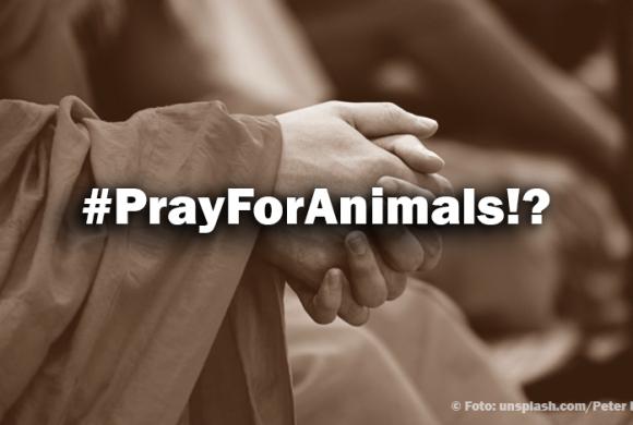 #PrayForAnimals!? – Warum tun so viele nichts?