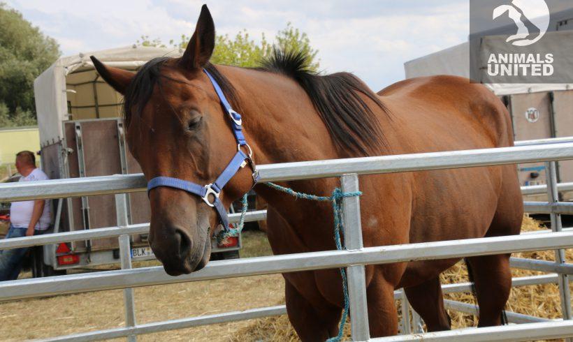 Offener Brief von Animals United an die Veranstalter des Havelsberger Markt