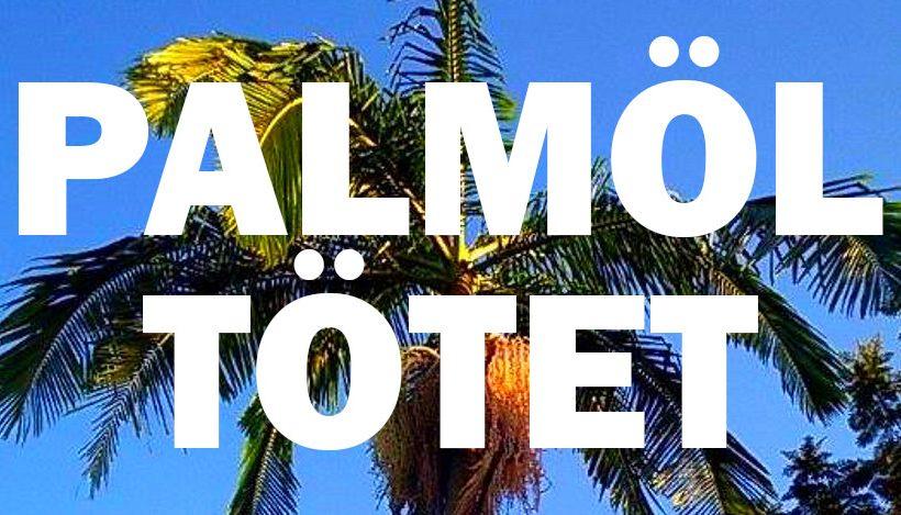 Warum wir versuchen sollten, Palmöl aus unserem Alltag zu streichen