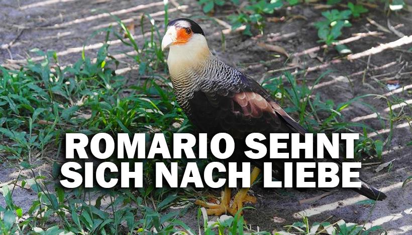 """""""Tal der Tiere"""": Patenschaft für den einsamen Schopfkarakara Romário"""