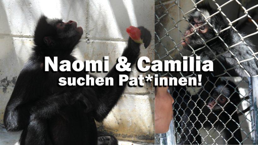 """""""Tal der Tiere"""": Patenschaft für die Spinnenaffen Naomi & Camilia"""