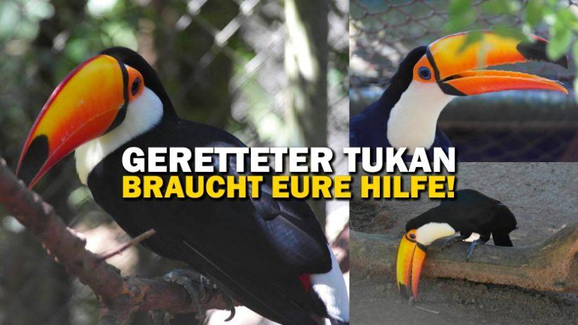 """""""Tal der Tiere"""": Patenschaft für die Tukane Tuquinha, Tuco & Xuxa"""