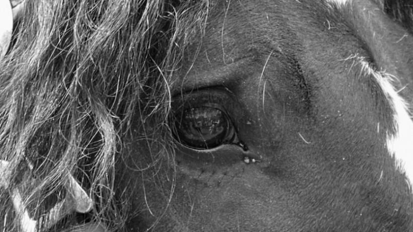 """""""Das Glück dieser Erde"""" ist nicht das der Pferde"""