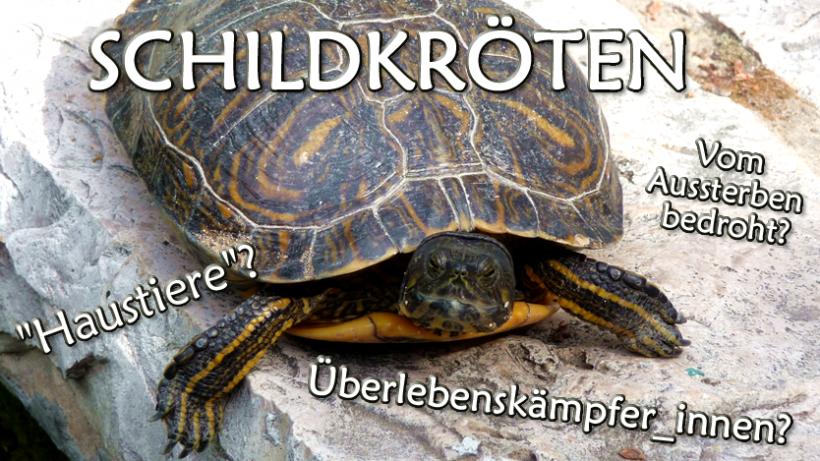 """Schildkröten: In der Wildnis bedroht, als """"Haustiere"""" missbraucht"""