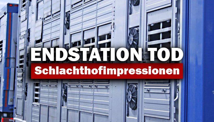 """Endstation """"Tod"""" – Schlachthofimpressionen"""