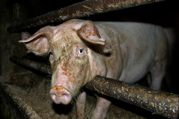 Lebewesen, keine Lebensmittel!