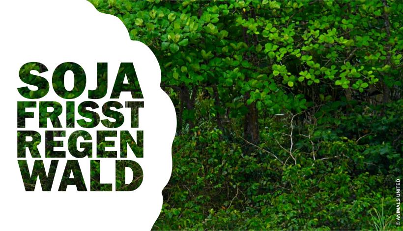 Sojaschnitzel? Dafür stirbt doch Regenwald?