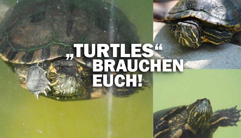"""""""Tal der Tiere"""": Patenschaft für die Schildkröten-Gang """"Turtles"""""""