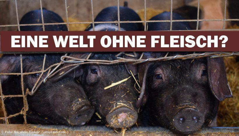 THE END OF MEAT – Eine Welt ohne Fleisch?