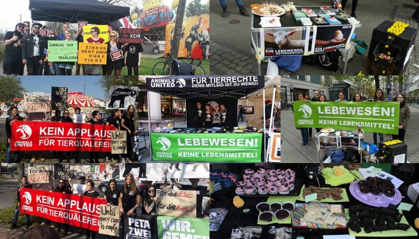 WHAT A WEEK: Von kreativer Osteraktion zu Demo vor Zirkus Afrika