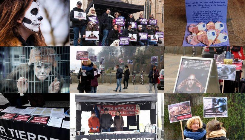 WHAT A WEEK: Von Infostand über Ponykarussells bis zu Anti-Pelz-Aktion