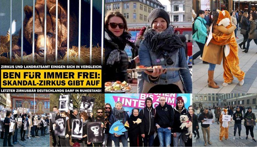 WHAT A WEEK: Von endgültiger Freiheit für Zirkusbär Ben bis blutige Festtagstafel