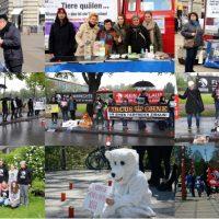 WHAT A WEEK: Von Admintreffen bis Demomarsch zum Tierpark