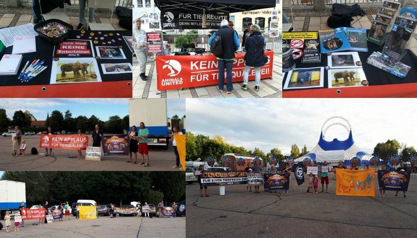 WHAT A WEEK: Von Weltelefantentag-Aktion bis Zirkus-Mahnwache