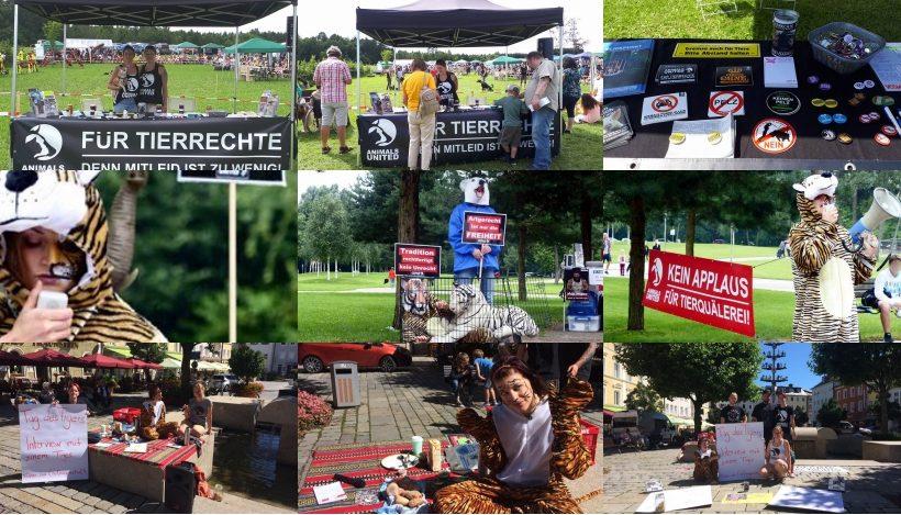 """WHAT A WEEK: Von Aktionen zum """"Tag des Tigers"""" bis Tierheimfest"""
