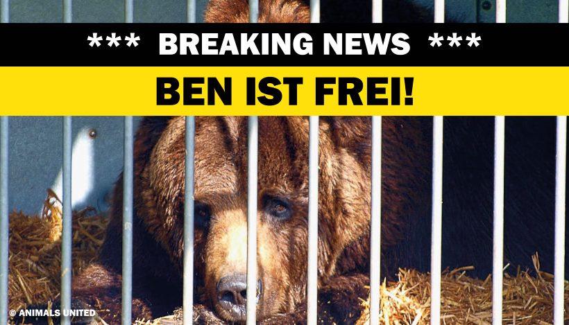 ERFOLG: Bär Ben muss nicht zurück in den Zirkus!