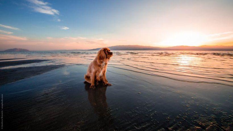 Tierschutz im Urlaub: Urlaubsplanung mit tierischer_m Mitbewohner_in