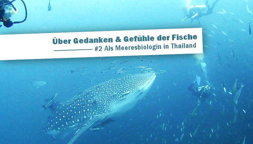 Über Gedanken und Gefühle der Fische | #2 Als Meeresbiologin in Thailand