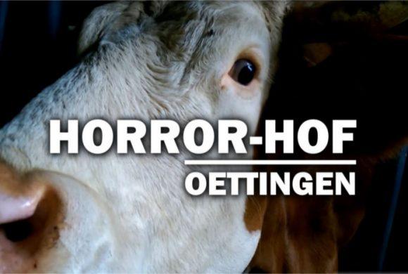Horror-Hof von Oettingen: Tote Katzen und Kühe, Kot und Müll überall (Pressemeldung inkl. Updates)