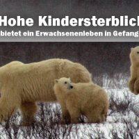 Hohe Kindersterblichkeit in Zoos – Was hätte ihr Leben noch geboten?
