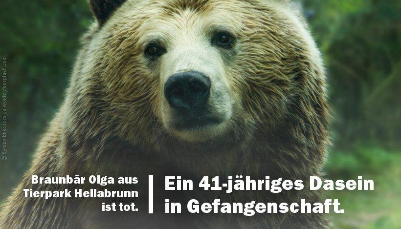 Zoo Hellabrunn: Braunbär Olga ist tot – 41 Jahre Leben in Gefangenschaft