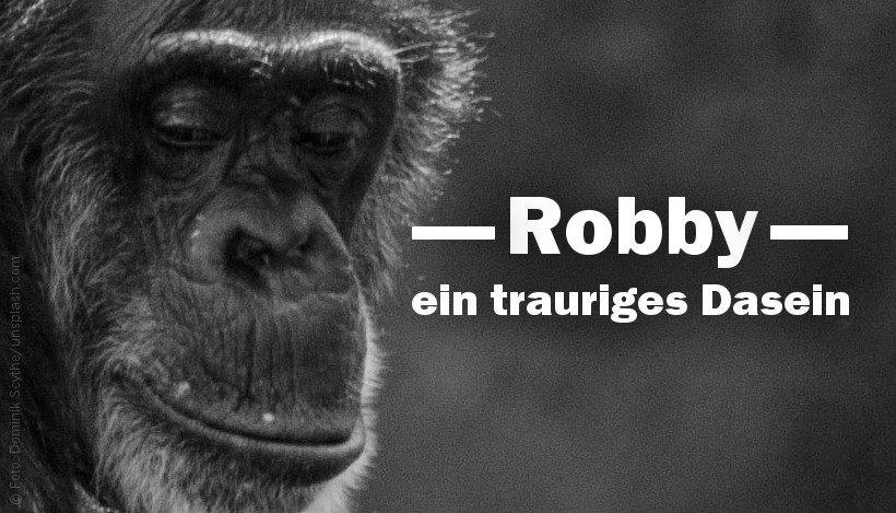 Zirkusschimpanse Robby – ein trauriges Dasein
